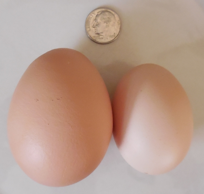 Large egg and Peewee egg