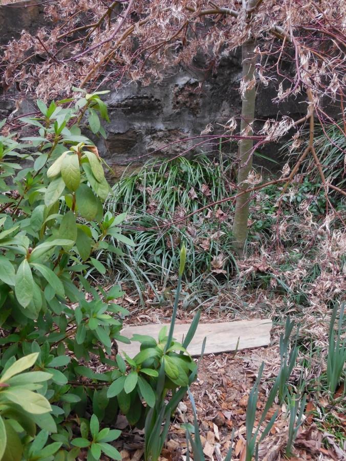Victoria's Stone by Azalea & Japanese Maple